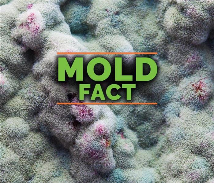 Mold Remediation 4 Different Types of House Mold You Should Be Aware Of