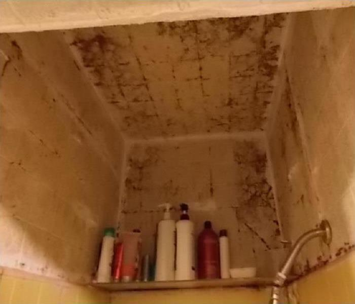 Mold Remediation Tips to Keep Mold Out of Your Bathroom