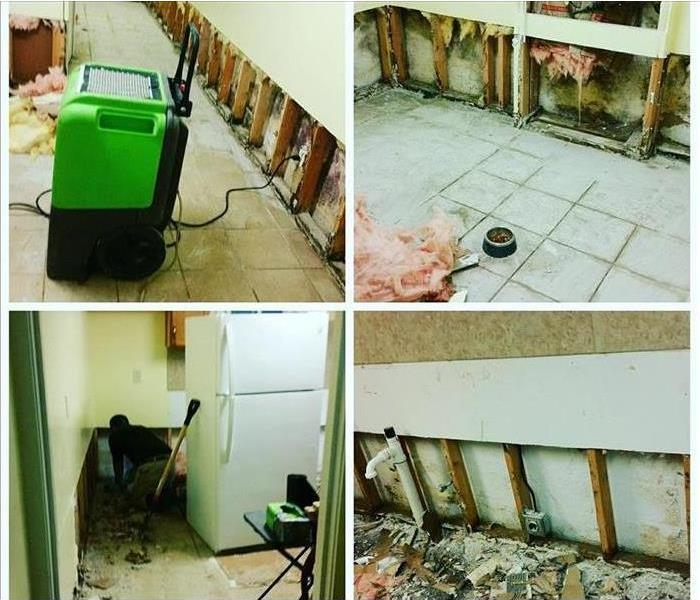 Collage of four pictures of mold present in a kitchen behind walls