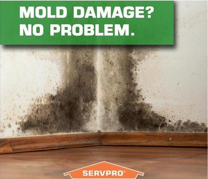 Mold Remediation Is There Mold Hidden in YOUR Home?